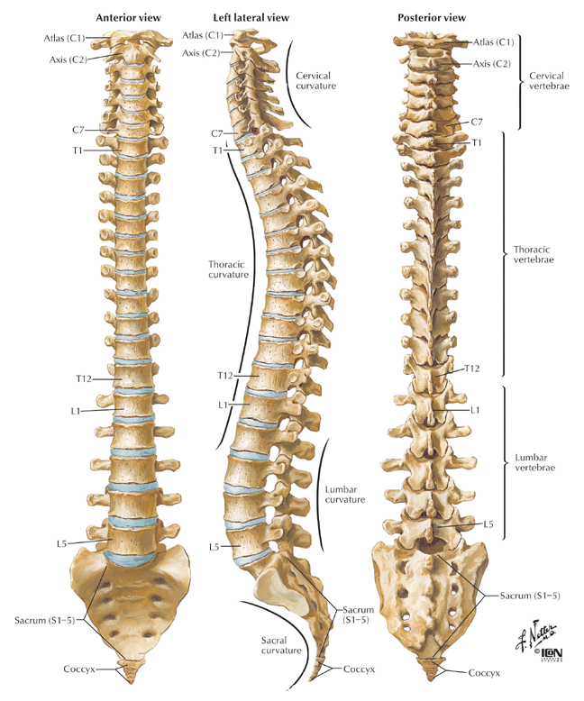 An Inside Look at Spinal Osteoporosis, Scoliosis and Osteophytosis